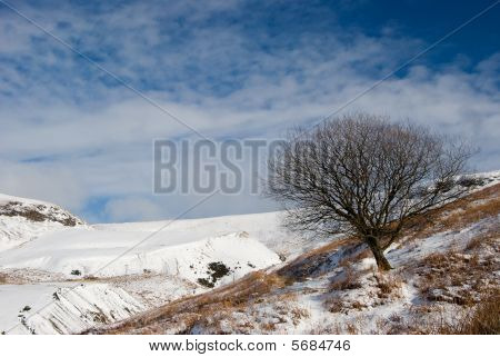 Lone Tree and Snowcapped mountains