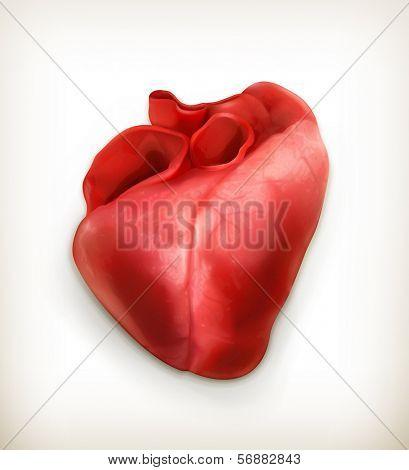 Human heart, bitmap copy