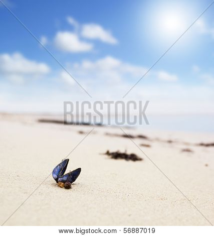 Closeup of a seashell on a sunny beach. Small depth of field with focus on the blue shell