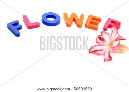Word Flower