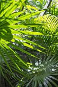 stock photo of rafters  - Palm leaves in the sun and the roof rafters - JPG