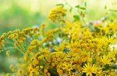 picture of tansy  - Summer bouquet with yellow tansy and wildflowers - JPG