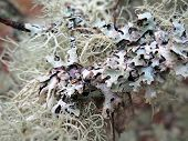Lichen up Close