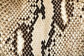 stock photo of mustering  - Texture of genuine snakeskin Close up real leather texture - JPG