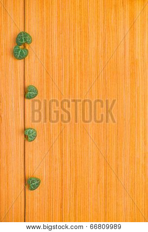 Tendril Of Ceropegia Woodii Framed On Wooden Background