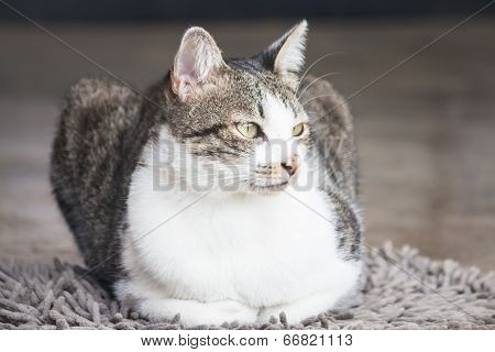 Young Cat Sitting On Carpet