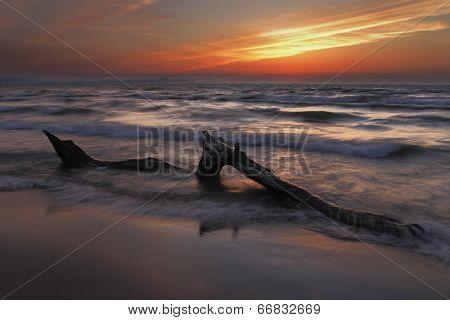 Driftwood On Lake Huron Beach At Sunset