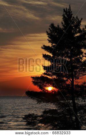 Eastern White Pine On Shore Of Lake Huron At Sunset