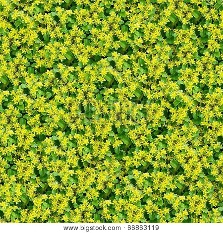 yellow flowers seamless background. (Seamless pattern for continuous replicate)