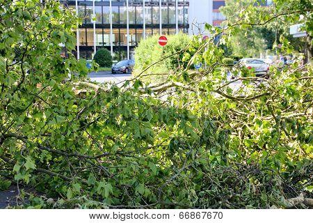 Fallen Tree Blown Over By Heavy Winds  In Dusseldorf, Germany.