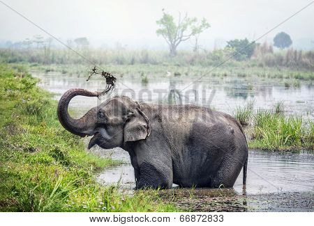 Elephant Bathing In Nepal