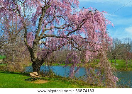 Spring Blossoms Holmdel Park