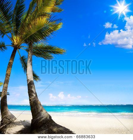 Art Untouched Caribbean Tropical Beach