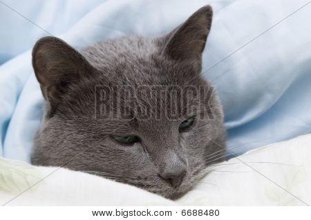 Covers Cat