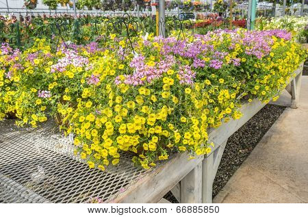 Yellow and Pink Flowers in Hanging Planters