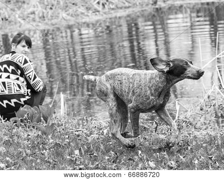 german shorthaired pointer and her owner playing by the water's edig