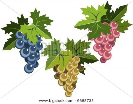 Grape bunches with leaves