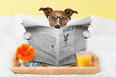foto of bed breakfast  - having breakfast in bed and reading the morning news - JPG