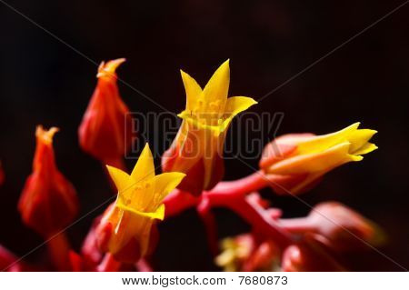 Yellow And Red Flowers.
