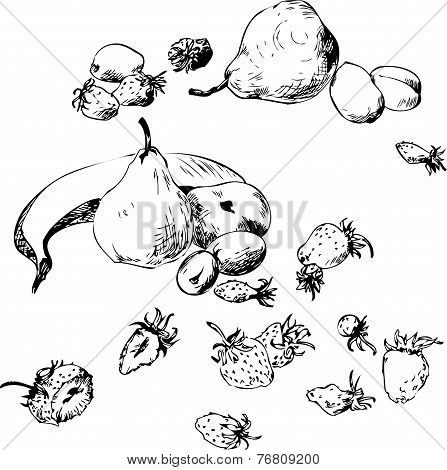 set of line drawing fruits