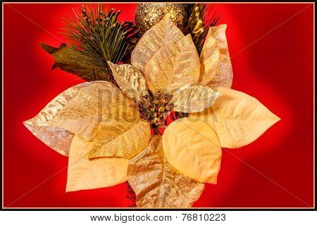 Gold Poinsettia