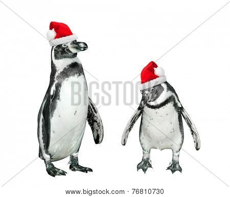 Funny penguins with santa's cap on white background.