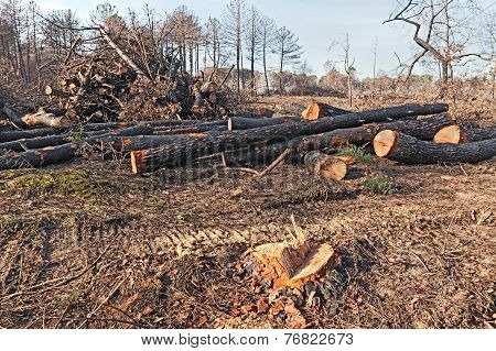 Cutted Trees