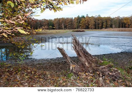 Stump near the pond after harvesting