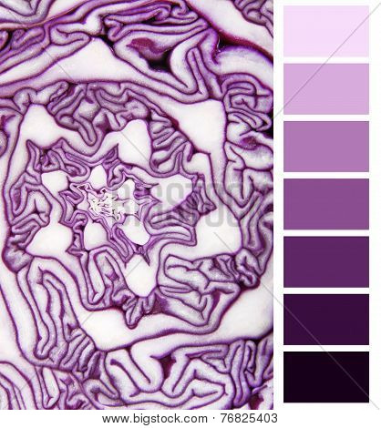 color selection violet cabbage complimentary palette chart
