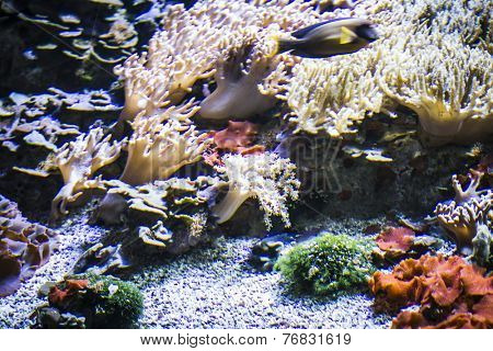 Seascape, seabed with fish and coral reef