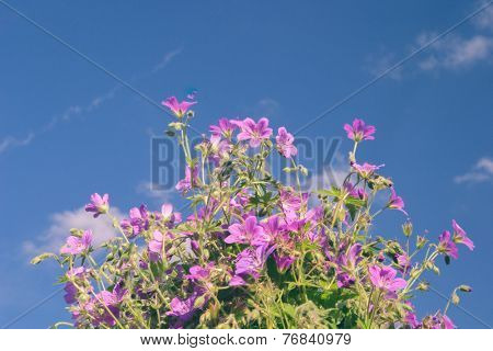 Flowers on a background of blue sky, a bright sunny day