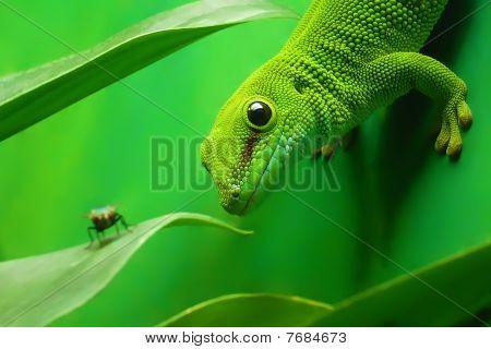 grünen Gecko Eidechse