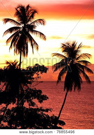 Palm trees at sunset, Tobago.