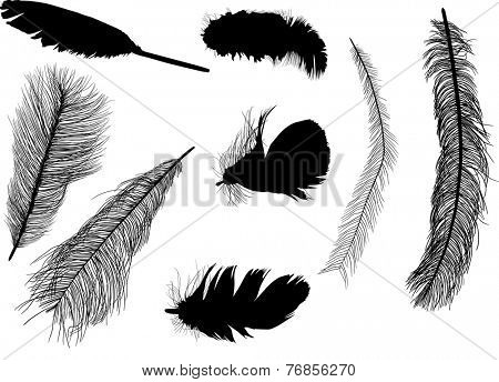 illustration with eight feather silhouettes isolated on white background