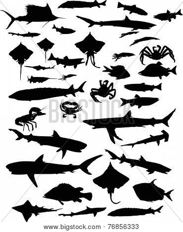 illustration with fish silhouettes collection isolated on white background