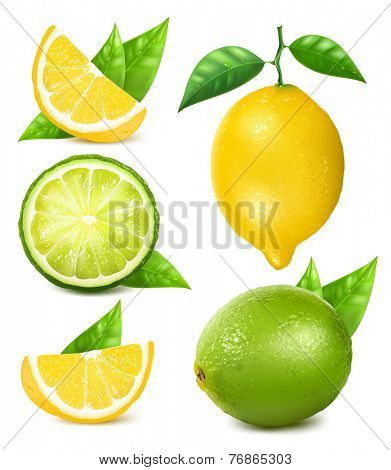 Fresh lemons and limes with leaves. Collection of different vector illustration.