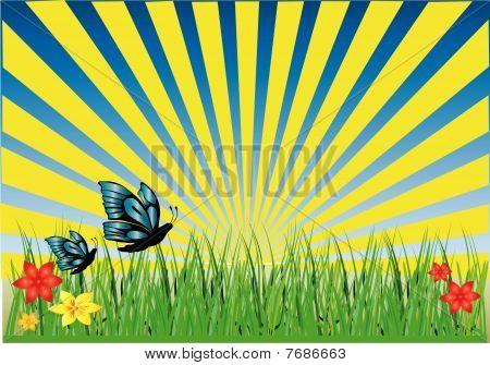 Grass Butterflies Rays Yellow
