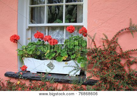 Window box with geraniums on pink wall of home