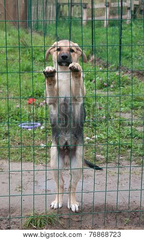 Little Yellow Puppy Standing For Lattice Fence