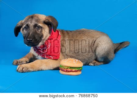 Thin Yellow Puppy In Red Bandane Lying On Blue