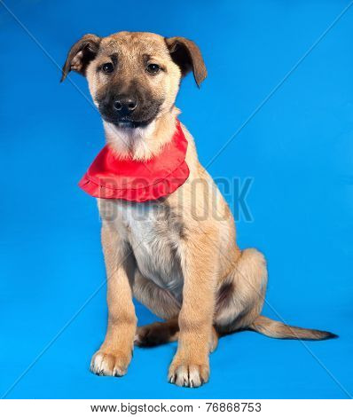 Thin Yellow Puppy In Red Bandane Sitting On Blue