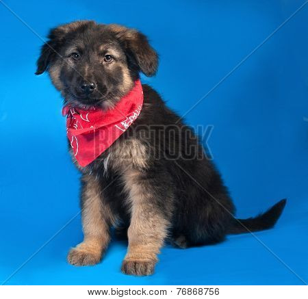 Black And Red Shaggy Puppy In Red Bandane Sitting On Blue
