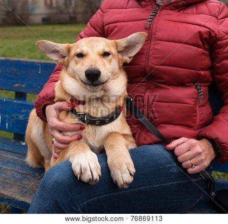 Yellow Puppy Sits And Smiling On Bench Next To Hostess