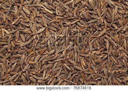 Cumin seed jeera(india) or Cuminum cyminum