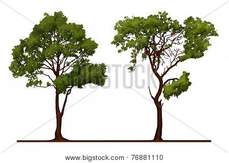 A Tree Illustration Isolated on White
