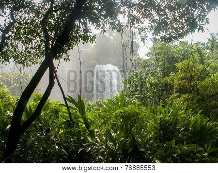Iguazu Falls Waterfall Through Plants