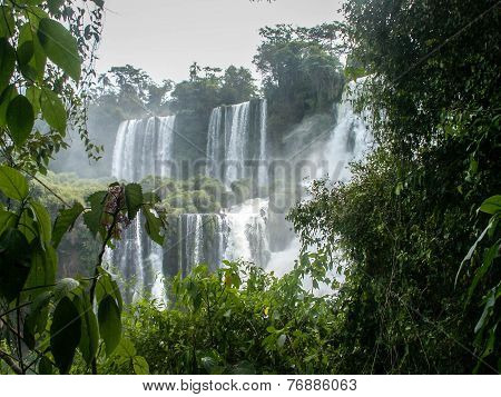 Iguazu Falls Cascade Through Foliage