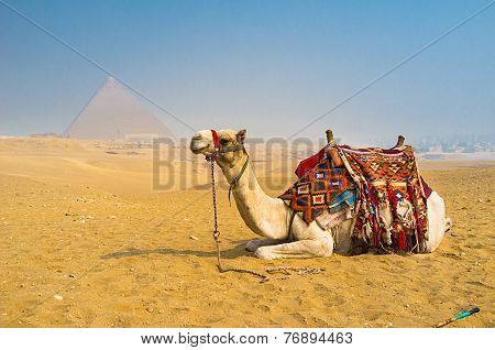 The Desert Transport