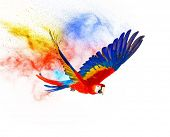 foto of parrots  - Colourful flying parrot isolated on white  - JPG