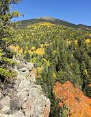 picture of lamar  - Lamar Haines Memorial Wildlife Area in the San Francisco Mountains north of Flagstaff Arizona and a view of Agassiz Peak in the Fall